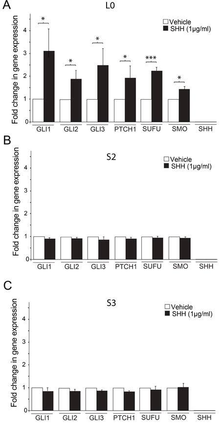 SHH treatment induces changes in SHH signaling pathway gene expression in L0, but not S2 and S3 cell lines.