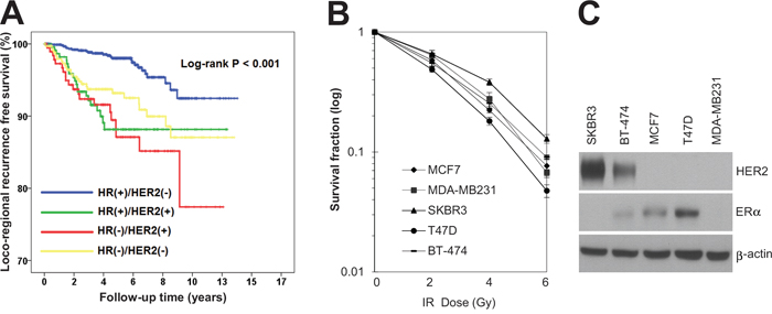 HR-/HER2+ subtype was associated with radioresistance in breast cancer patients as well as breast cancer cell lines.