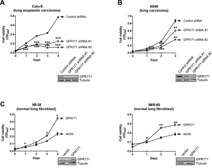GPR171 promotes proliferation of lung cancer cells.