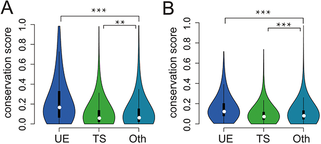The conservation of UE/TS lncRNAs.