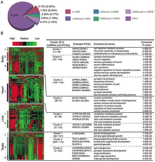 Functional predictions of TS lncRNAs.