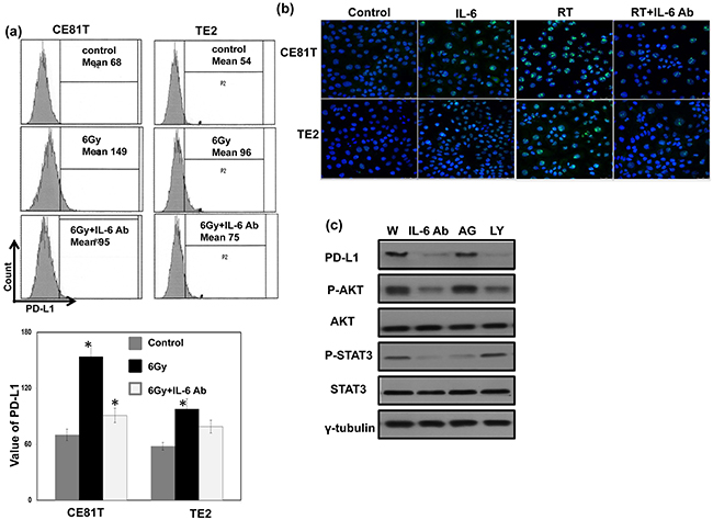 Role of IL-6 signaling on PD-L1 expression in human esophageal cancer.