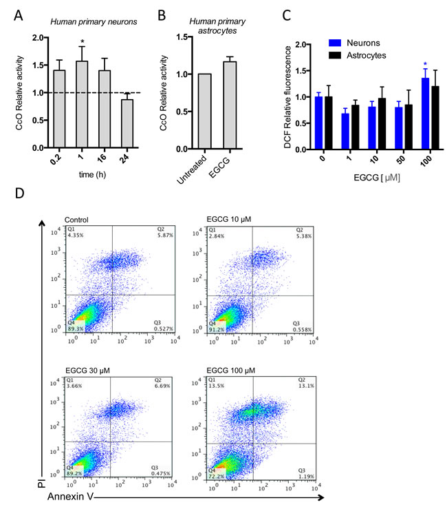 EGCG activates CcO activity without increasing oxidative stress or apoptosis.
