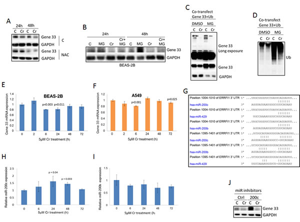 Gene 33 expression is regulated by Cr(VI) through multiple mechanisms.