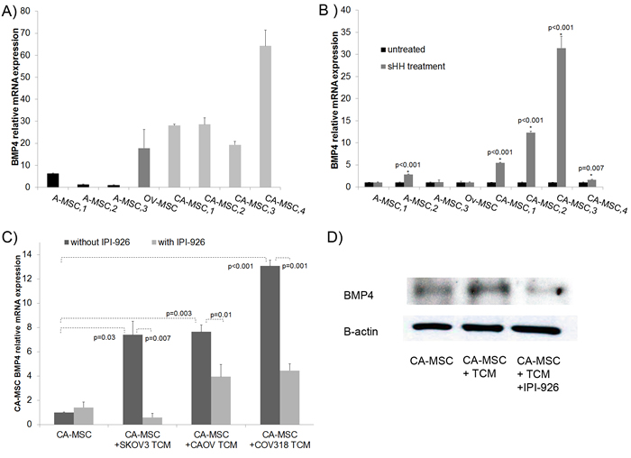 CA-MSCs respond to tumor derived HH with increased BMP4.