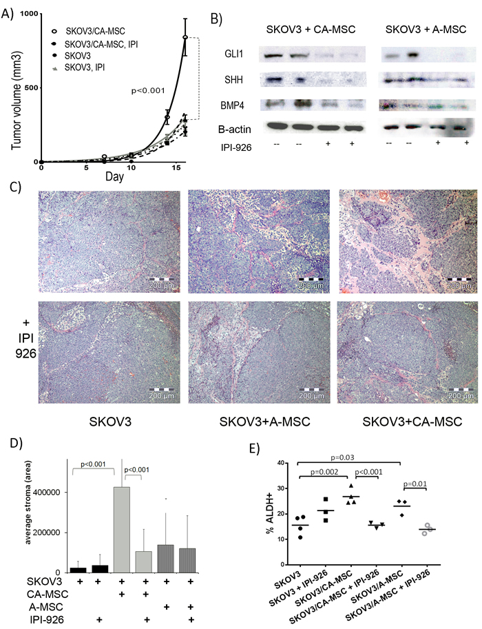 HH inhibition blocks CA-MSC mediated tumor growth promotion and stromal deposition.