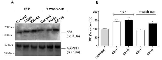Effects of the MDM2 inhibitors on p53 protein accumulation.