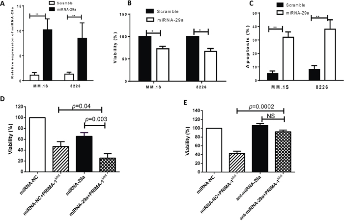Overexpression of miRNA-29a in MM cells resulted in decrease of cell viability and increase of apoptosis.