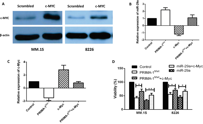 Overexpression of c-Myc reverted apoptosis and cell viability induced by miRNA-29a in MM cells.