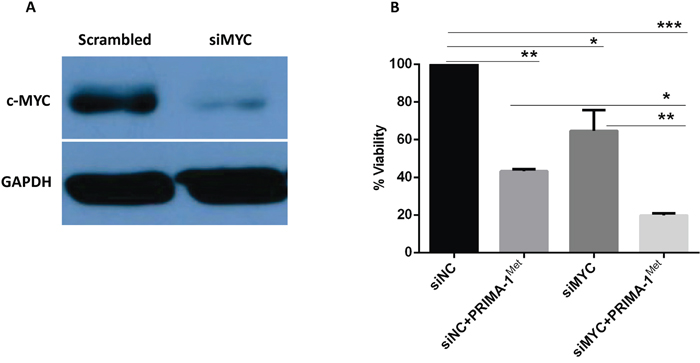 Silencing of MYC gene triggers MM cells death and potentiates PRIMA-1Met-induced cytotoxicity.