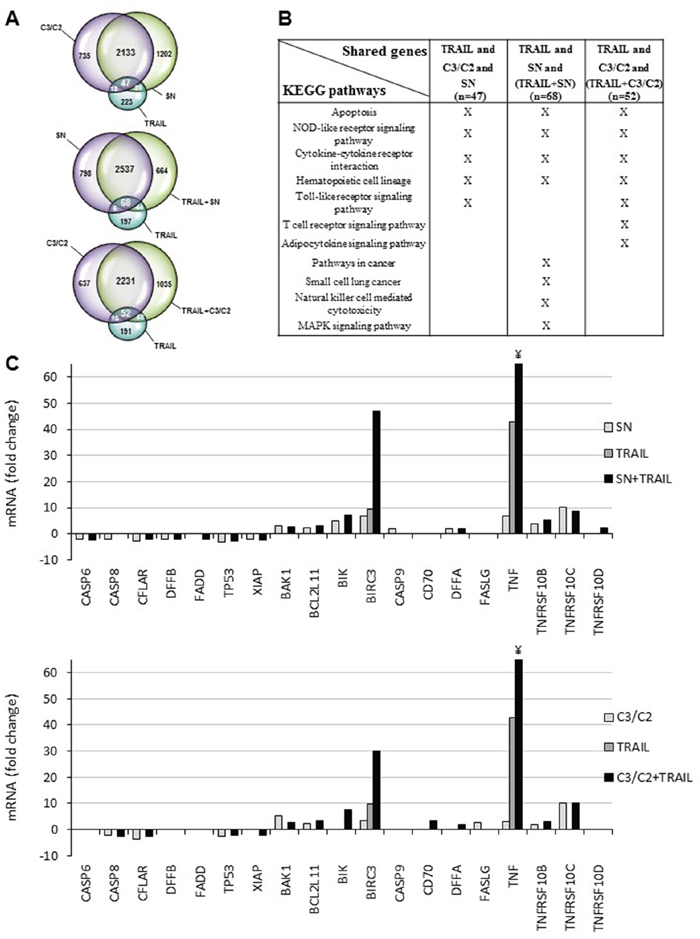 Transcriptomic analyses of HT29 cells treated with TRAIL combined or not with propionibacterial supernatant or metabolites.