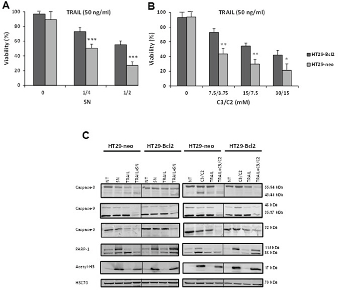 Bcl-2 is a resistance factor towards treatment induced by combination of TRAIL with SN or C3/C2.