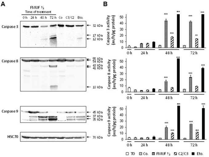 P. freudenreichii-fermented milk ultrafiltrate activates caspases-3, -8 and -9 in HT29 cells.