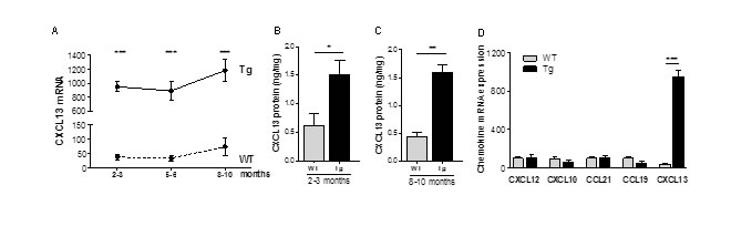 Chemokine expression in the thymus of K5-CXCL13 Tg mice.