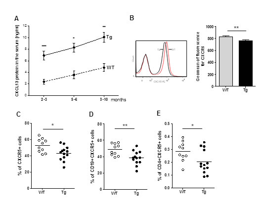 Alterations in CXCL13 serum level and circulating CXCR5