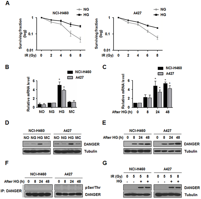 HG induces DANGER overexpression in NSCLC cells.