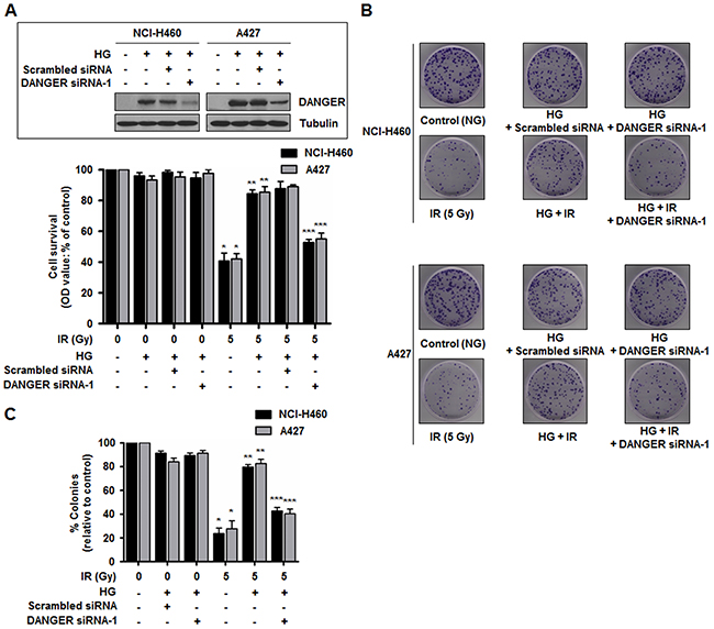 Down-regulation of DANGER expression reduces HG-induced radioresistance in NSCLC cells.