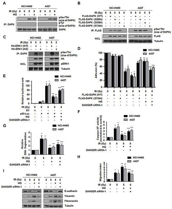 DANGER reduces DAPK-dependent anoikis in irradiated NSCLC cells.