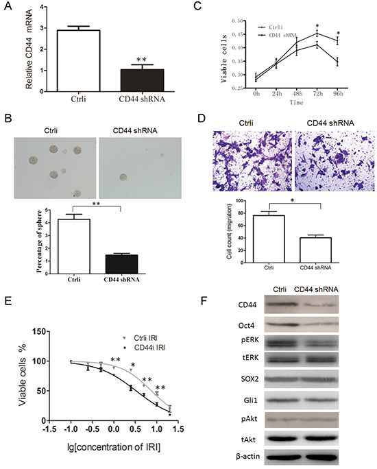 CD44 knockdown negatively regulates the properties of CSCs and the expression of p-ERK and Oct4.