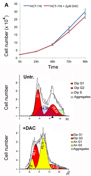 Extended treatment with DAC leads to aneuploidy.
