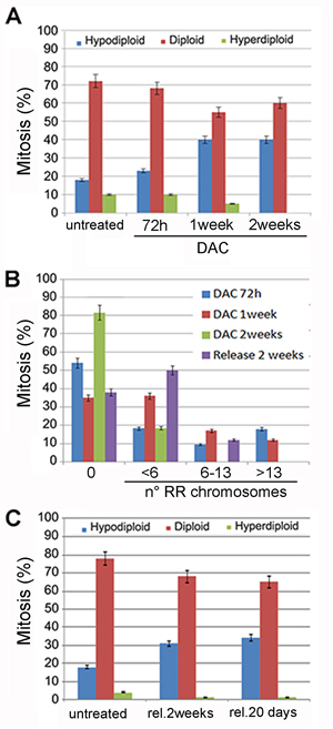 Prolonged DAC treatment causes aneuploidy and railroad track chromosomes. A.