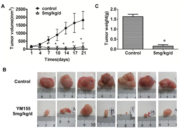 YM155 inhibits xenograft growth of gastric cancer.