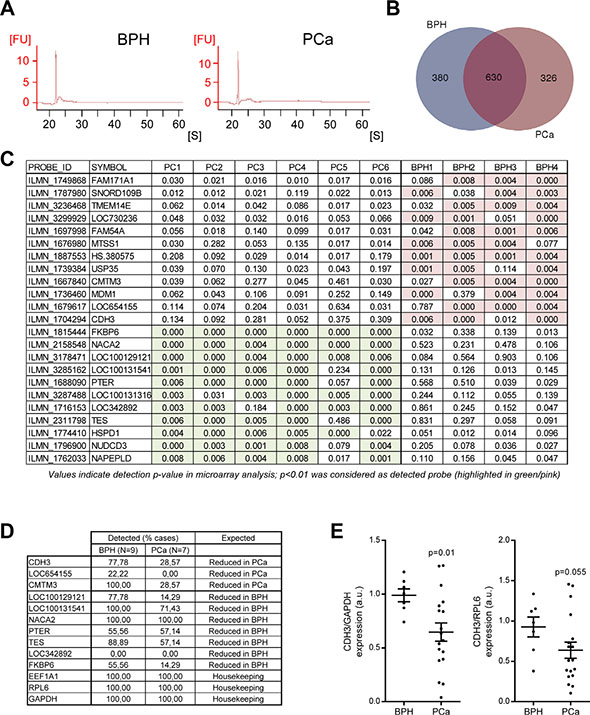 Transcriptomic analysis of uEVs reveals transcripts with differential abundance in BPH and PCa.