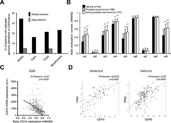 Evaluation of the molecular events accounting for CDH3 down-regulation in PCa.