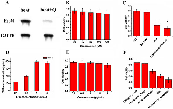 In vitro combined treatment with Quercetin and LPS.