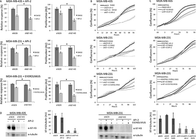 Effects on in vitro proliferation of MDA-MB-435 and MDA-MB-231 B7-H3 knockdown cells treated or not with API-2 and everolimus.