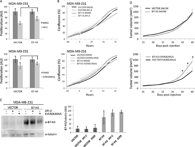 In vitro and in vivo effects of MDA-MB-231 overexpressing B7-H3 cells treated or not with API-2 and everolimus.