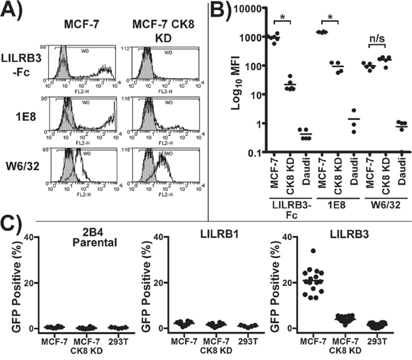 LILRB3 binding is dependent upon expression of cytokeratin 8.