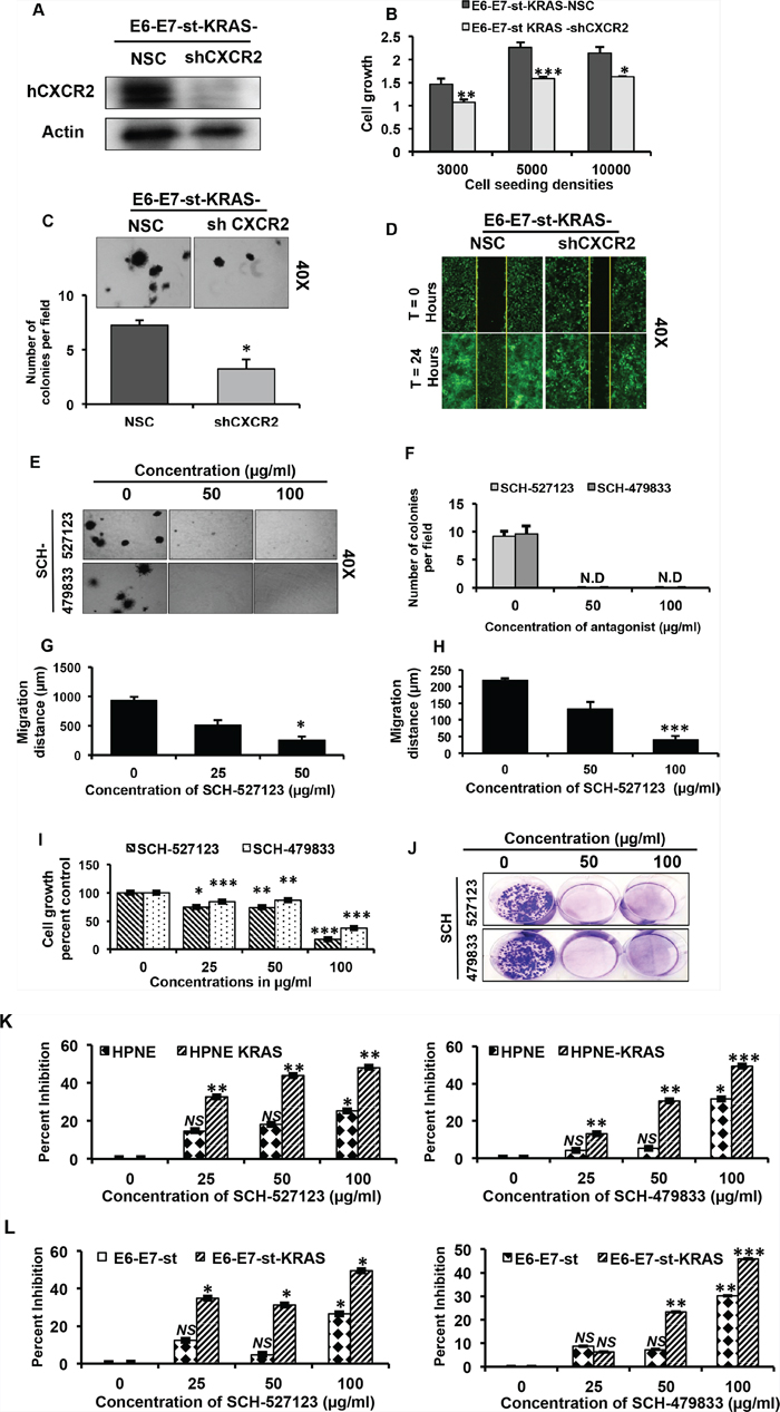CXCR2 signaling mediates KRAS(G12D)-induced autocrine cell growth and migration.