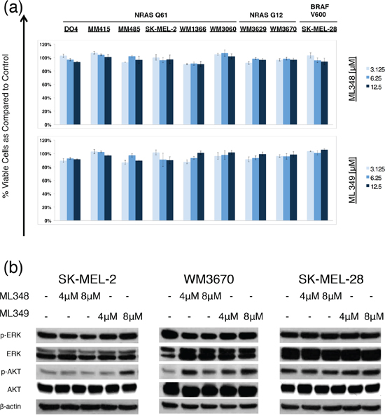 Effects of APT-1 and APT-2 inhibitors ML348 and ML349 effects on melanoma cells.
