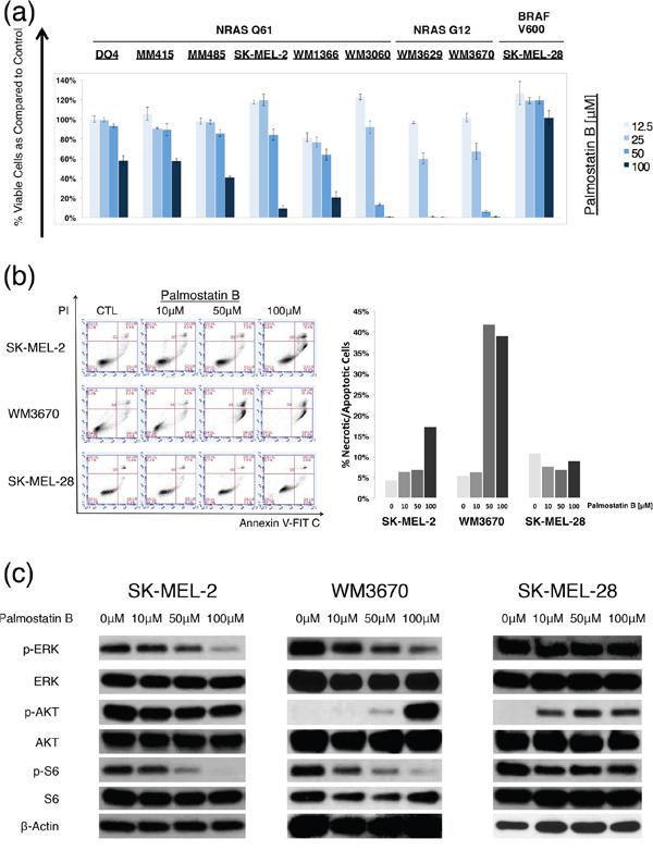 Palmostatin B effects on NRAS mutant melanoma cells.