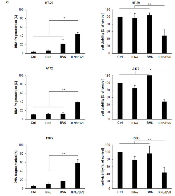 IFNα and BV6 synergistically induce cell death in various cancer cell lines.