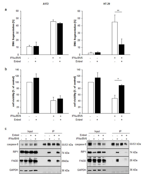 Differential requirement of TNFα for IFNα/BV6-induced cell death.