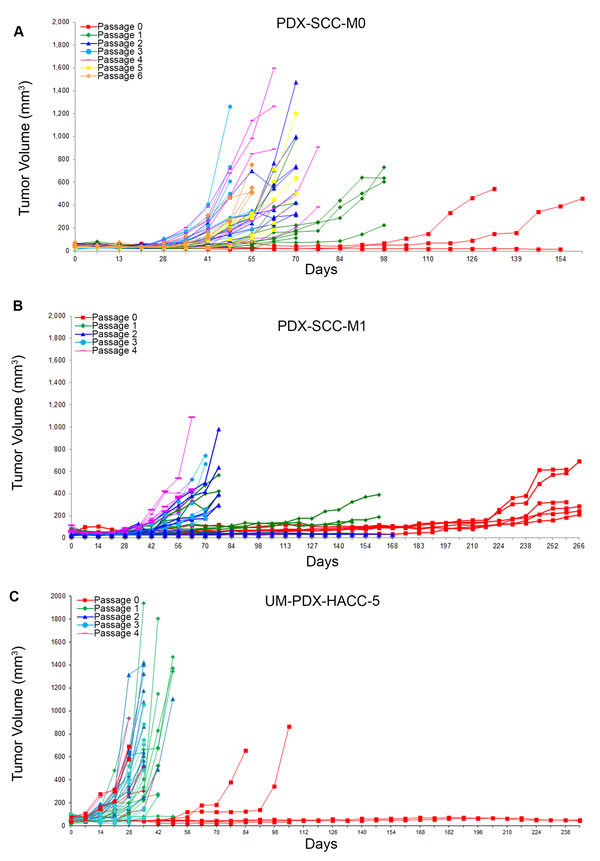 Head and neck cancer PDX models display decreased time to transplantation over passage.