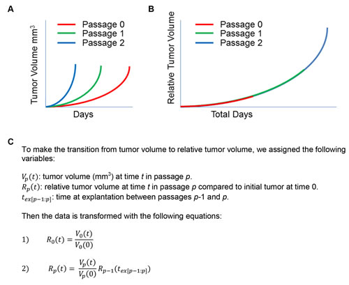Tumor growth information across multiple passages can be merged to reflect relative tumor volume over time.