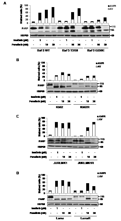 Ponatinib induces cell death in different TKI-resistant cell lines.