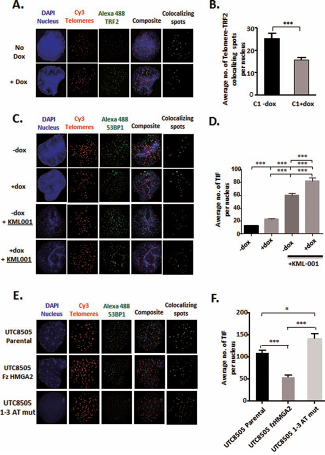 HMGA2 protects against telomeric TRF2 depletion and TIF formation.