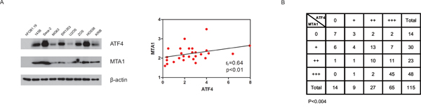 The association between ATF4 and MTA1.