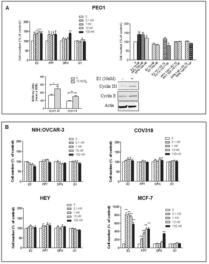 Effects of E2, the ERα-selective agonist PPT, the ERβ-selective agonist DPN, and the GPER-selective agonist G1 on the growth of HGSOC cell lines (PEO1, HEY, COV318 and NIH:OVCAR-3)