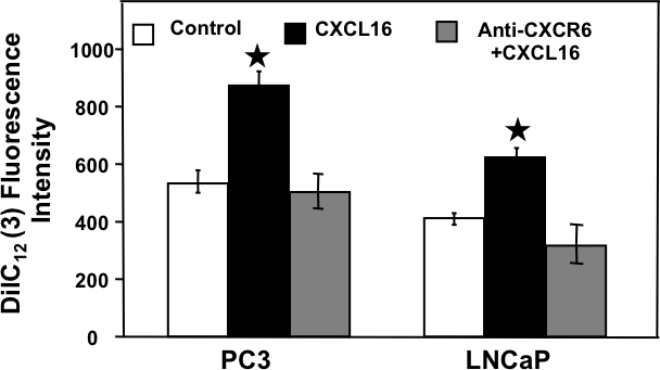 CXCR6-CXCL16 dependent adhesion of PCa cells with Human Bone marrow endothelial cells.