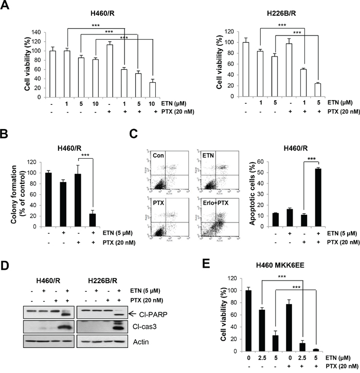Inhibition of EGFR activity enhances the sensitivity to PTX.
