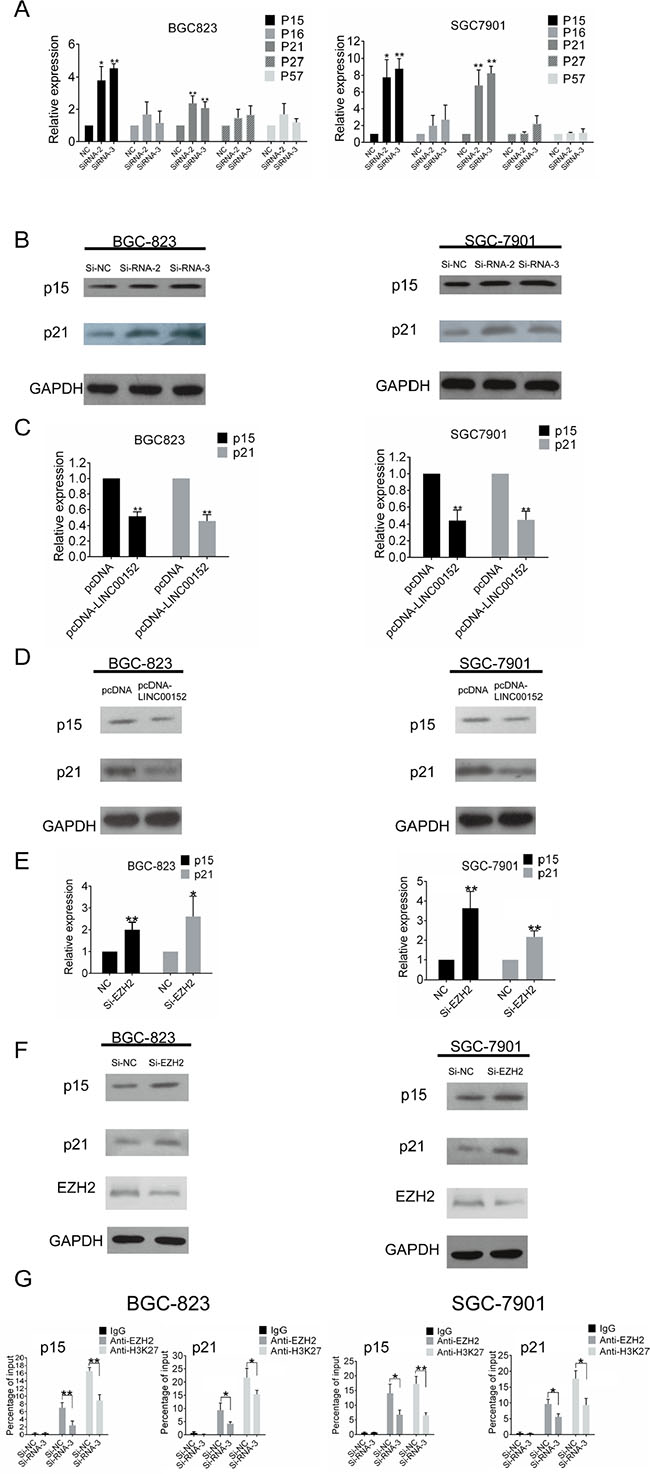 LINC00152 regulates p15 and p21 expression by binding to EZH2.