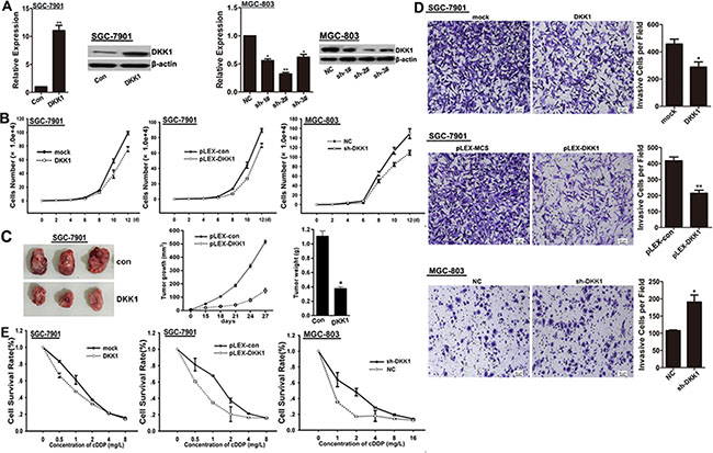 DKK1 impairs proliferation, invasion and chemo-resistance of GC cells.