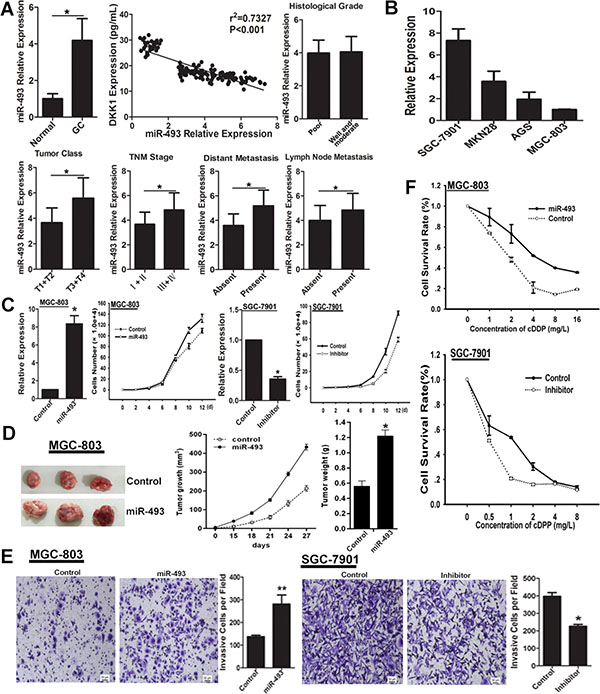 miR-493 promotes GC cells proliferation, invasion and chemo-resistance.