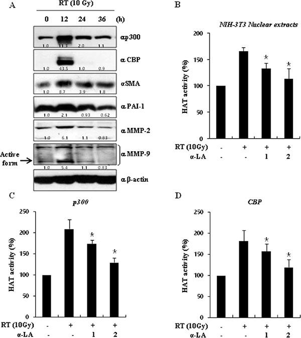α-LA decreases histone acetyltransferase (HAT) activity.