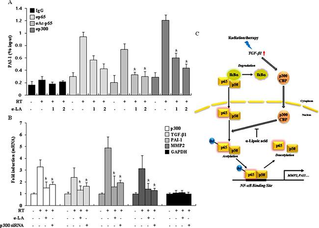 α-LA prevents RIF by antagonizing the hyperacetylation of p65.